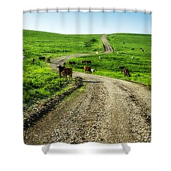 Cows On The Road Shower Curtain