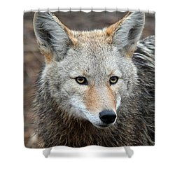 Shower Curtain featuring the photograph Coyote by Athena Mckinzie