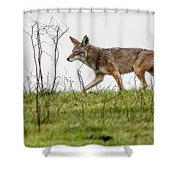 Shower Curtain featuring the photograph Coyote by Brian Williamson
