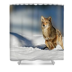 Coyote Go Go Go Shower Curtain