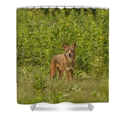 Coyote Happy Shower Curtain