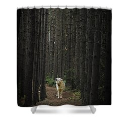 Coyote Howling In Woods Shower Curtain