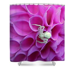 Crab Spider And Dahlia Shower Curtain
