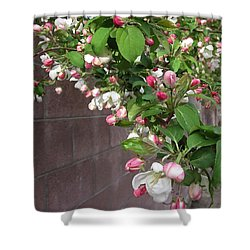 Shower Curtain featuring the photograph Crabapple Blossoms And Wall by Donald S Hall