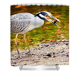 Crabbing In Florida Shower Curtain