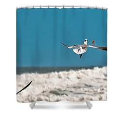 Shower Curtain featuring the photograph Cracker Tracker by DigiArt Diaries by Vicky B Fuller