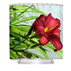 Cranberry Colored Lily Shower Curtain by Kay Novy