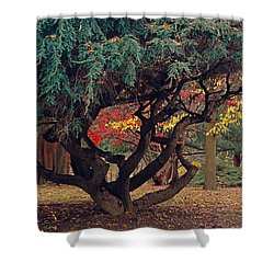 Cranbury Monkey Puzzle Shower Curtain