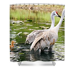 Crane Family Goes For A Swim Shower Curtain