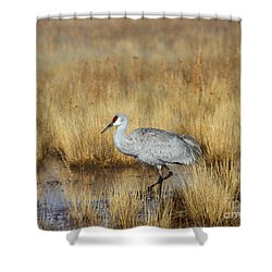 Shower Curtain featuring the photograph  Solitary Crane In The Field by Ruth Jolly