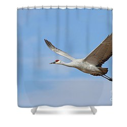 Shower Curtain featuring the photograph Crane In The Skies by Ruth Jolly