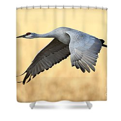 Crane Over Golden Field Shower Curtain