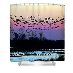 Crane Watch 2013 Shower Curtain
