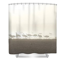 Shower Curtain featuring the photograph Cranes In The Mist by Ruth Jolly