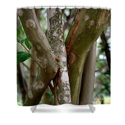 Shower Curtain featuring the photograph Crape Myrtle Branches by Peter Piatt