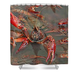 Crawfish Boil Galveston Style Shower Curtain