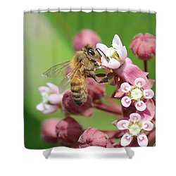 Crazy For Milkweed Shower Curtain by Lucinda VanVleck