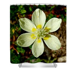 Cream Cup In Park Sierra-ca Shower Curtain by Ruth Hager