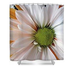 Shower Curtain featuring the photograph Creamsicle by Jean OKeeffe Macro Abundance Art
