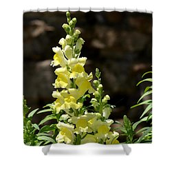 Creamy Yellow Snapdragon Shower Curtain by Maria Urso