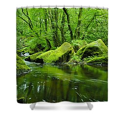Creek In The Woods Shower Curtain by Chevy Fleet