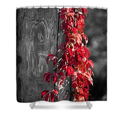 Creeper On Pole Desaturated Shower Curtain by Teresa Mucha