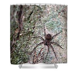 Creepy Spider Shower Curtain by Karol Livote