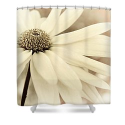 Creme Fraiche Shower Curtain