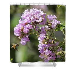 Crepe Myrtle And Honey Bee Shower Curtain by Jason Politte
