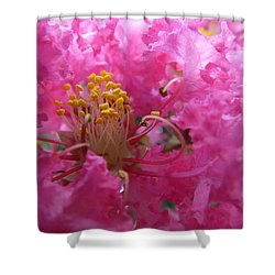 Crepe Myrtle In The Middle Shower Curtain
