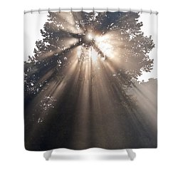 Crepuscular Rays Coming Through Tree In Fog At Sunrise Shower Curtain