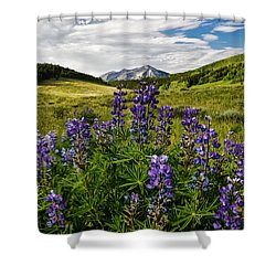 Crested Butte Lupines Shower Curtain