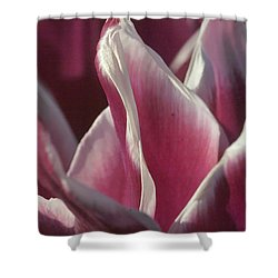 Shower Curtain featuring the photograph crimson Tulip by Rudi Prott