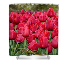Crimson Tulips  Shower Curtain by Richard Reeve