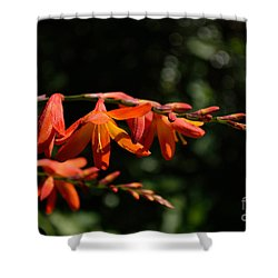 Crocosmia 'dusky Maiden' Flowers Shower Curtain