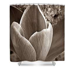 Crocus  Shower Curtain by Chris Berry