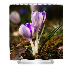 Shower Curtain featuring the photograph Crocus by Christine Sponchia