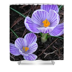 Crocus Shower Curtain by John Wartman