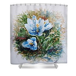 Crocuses Shower Curtain by Zaira Dzhaubaeva