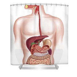 Cross Section Of Human Digestive System Shower Curtain by Leonello Calvetti