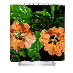 Shower Curtain featuring the photograph Crossandra by Ron Davidson