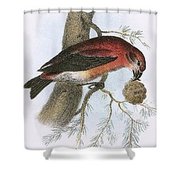 Crossbill Shower Curtain