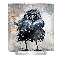 Crow After Rain Shower Curtain