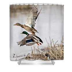 Crowded Flight Pattern Shower Curtain