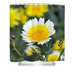 Crown Daisy Flower Shower Curtain by George Atsametakis