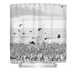 Crows In Cornfield Winter Shower Curtain by Dan Friend