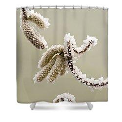 Crunchy Catkins Shower Curtain by Anne Gilbert