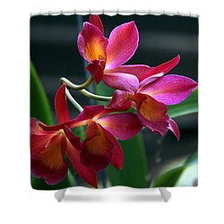 Ctna New River Orchid Shower Curtain