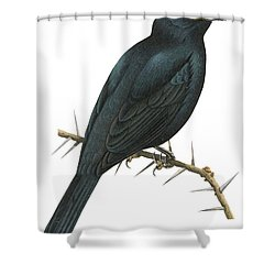 Cuckoo Shrike Shower Curtain by Anonymous