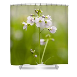 Cuckooflower Shower Curtain by Anne Gilbert